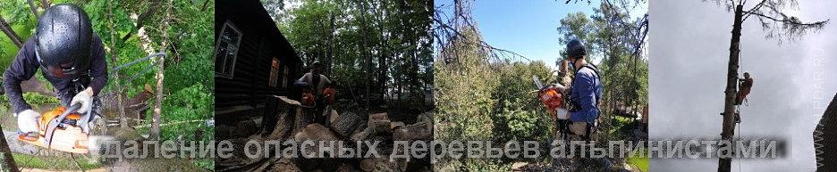 удаление деревьев альпинистами.jpg